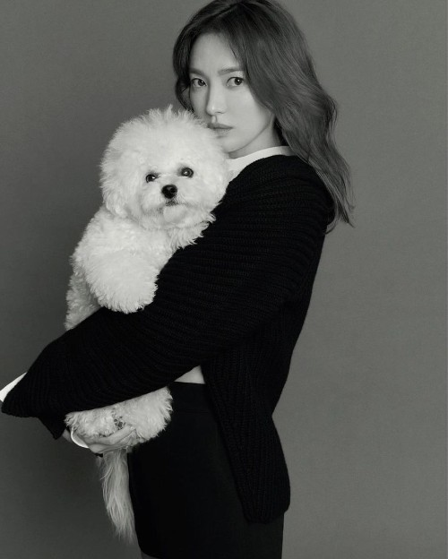 Song Hye Kyo takes her dog Ruby out for a walk to enjoy the spring weather on Wednesday in Busan! 3
